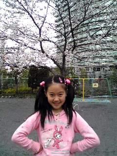 桜満開2☆